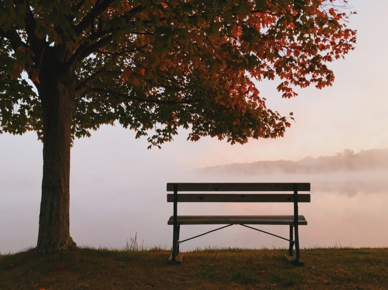 Bench under a tree