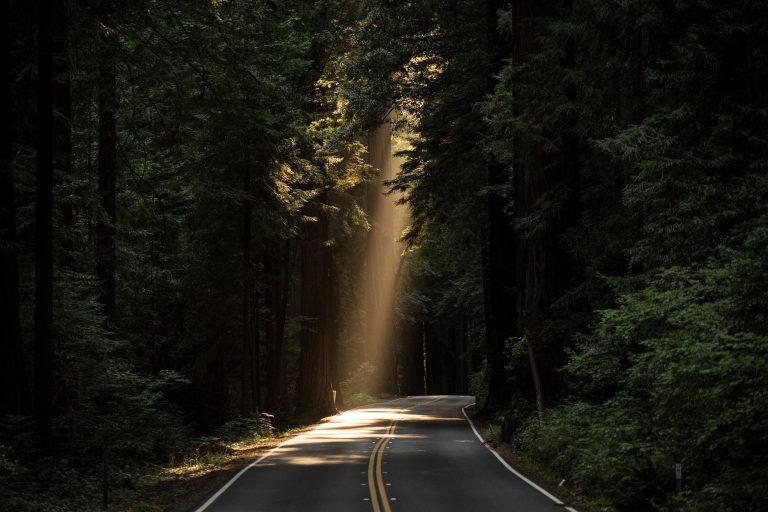 Ray of sunlight on woodland road